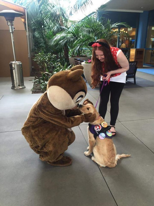 This service pup meeting Chip and loving every minute of it.