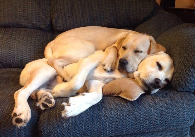 And finally, these buddies who love each other unconditionally.