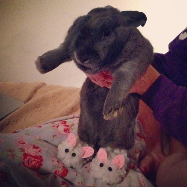 This cuddle bun wearing bunny slippers.