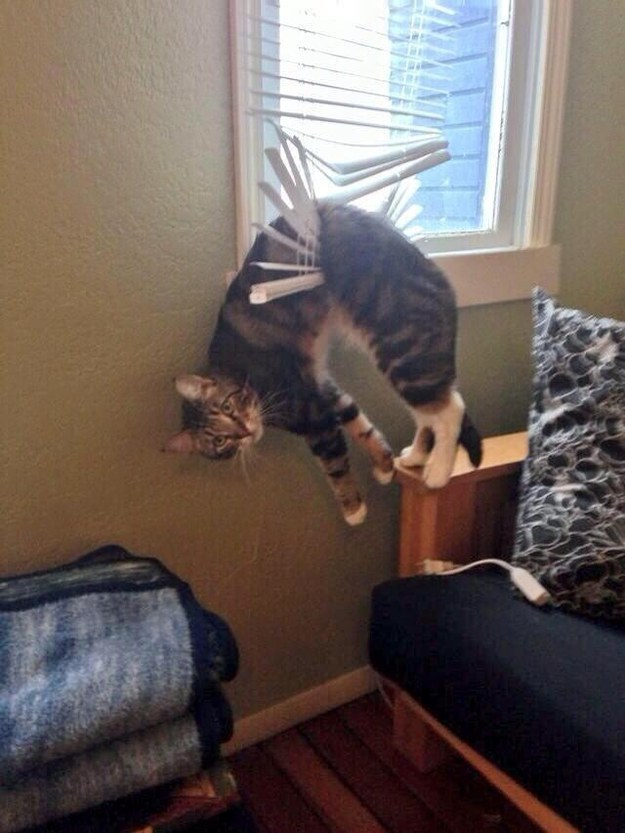 This cat who just really wanted to see the outside world: