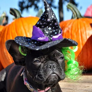 """This is my 'do I use my magic for good or evil' face. Tonight's the night we find out if I've got tricks or treats up my sleeve!"""