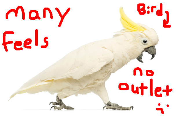 How To Cope With Your Emotions, According To This Cockatoo