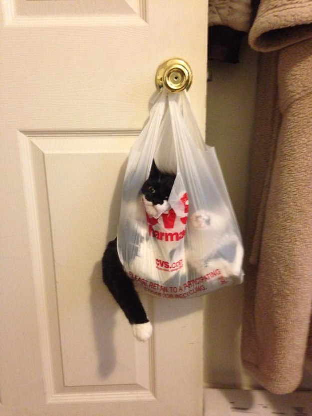 This cat who just wanted to know what was purchased at CVS: