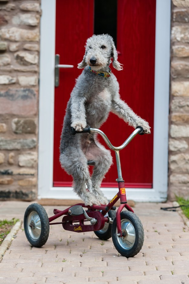 Nothing To See Here, Just A Dog Riding His Bike Like A Complete Boss