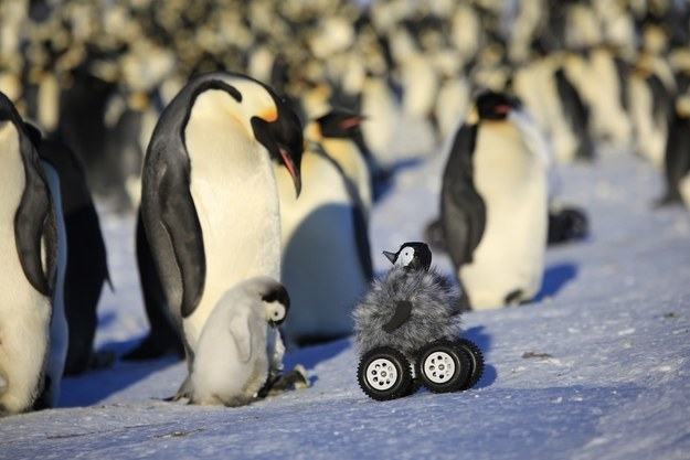 Scientists Dressed Up A Rover As A Baby Penguin To Infiltrate A Group Of Actual Penguins For Science