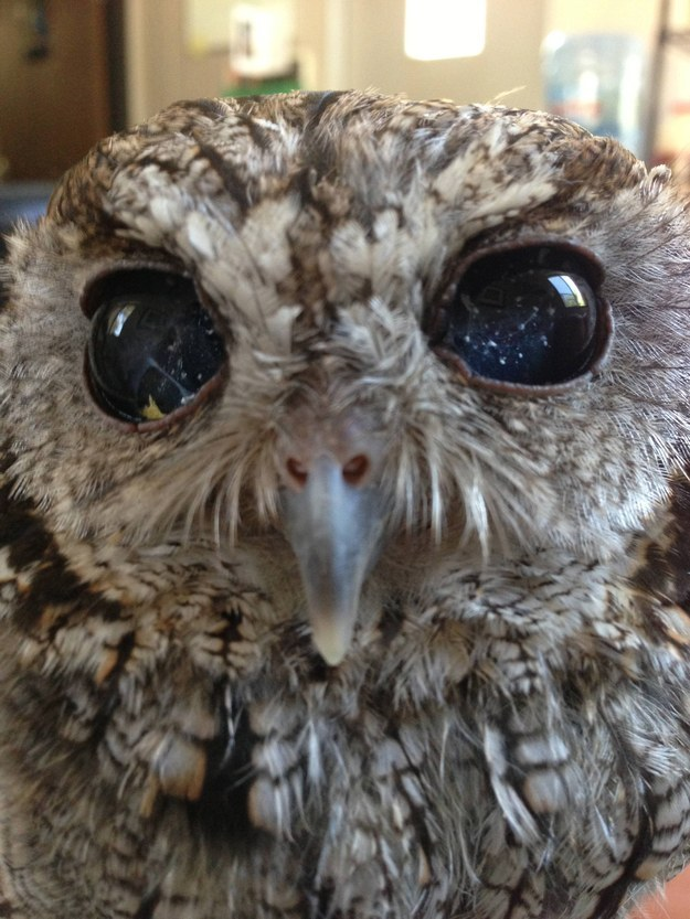 See The Universe In This Owl's Amazing Eyes