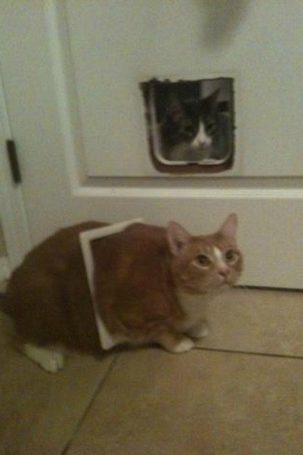 And this cat who tried to make it through the cat door: