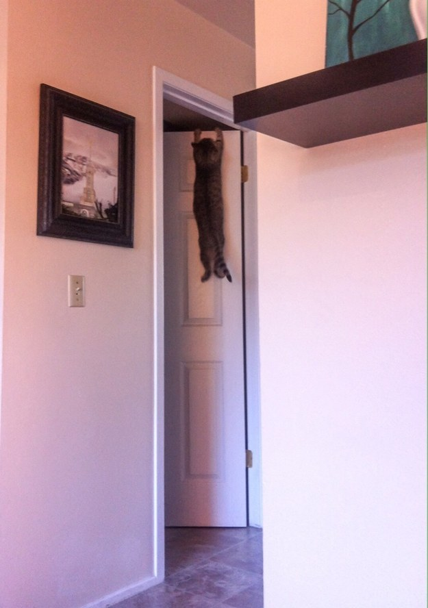 This cat who has no idea what to do now:
