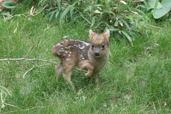 This Picture Of A Tiny Baby Deer Is The Cutest Thing You'll See Today