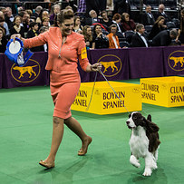 This Was Definitely The Best Thing That Happened At The Westminster Dog Show