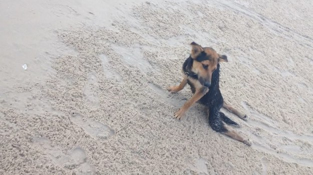 This Woman Found A Paralyzed Stray Dog On The Beach And Did Something Amazing