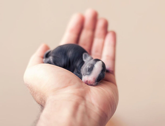 Watch These Baby Bunnies Grow Up In This Adorable Photoseries