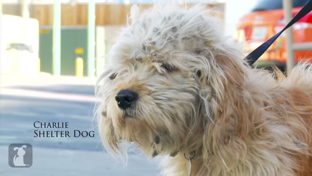 Watch This Incredible Timelapse Of What Happens When You Give A Homeless Dog A Makeover