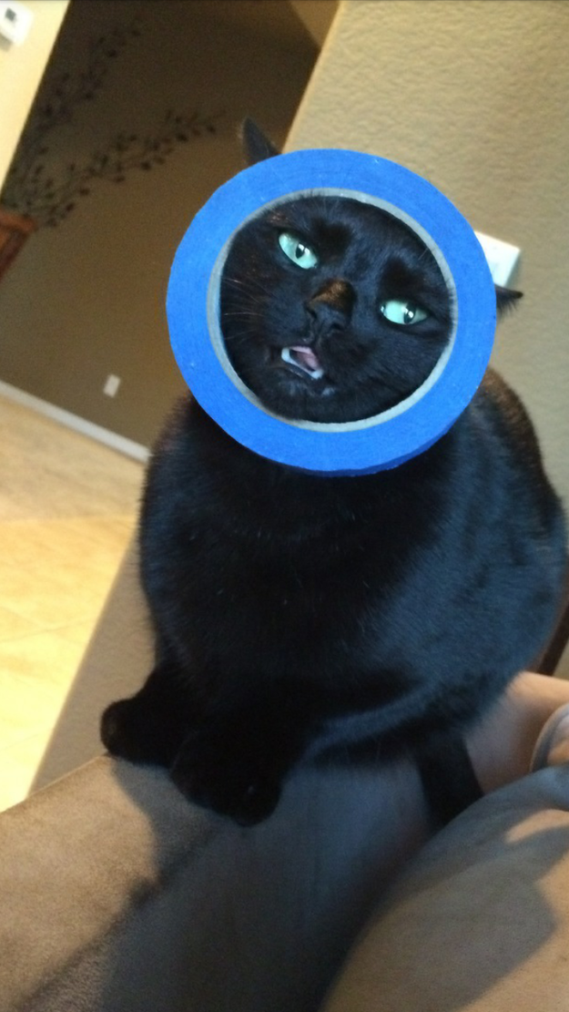 This cat who saw a round object and went for it: